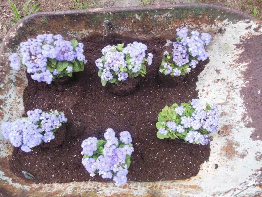 Wheelbarrow container garden for Another name for soil
