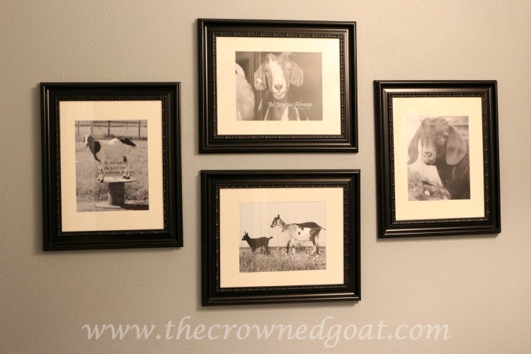 Tiffany Kimmet Photographs - The Crowned Goat - 062315-13 - Copy