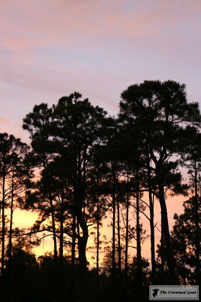 072315-32-Florida-Sunset-The-Crowned-Goat-1-1 House Tour Uncategorized