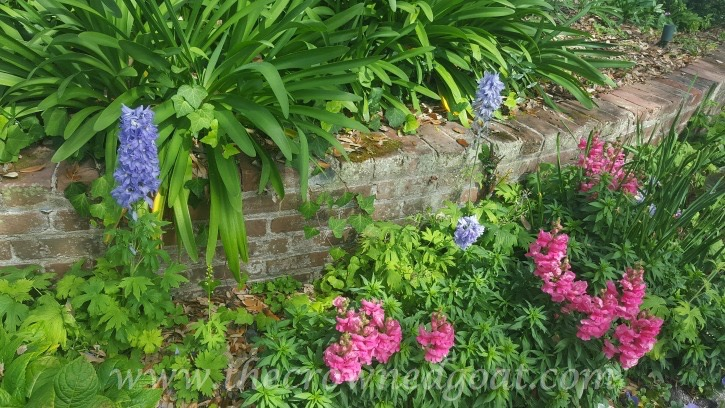 031516-2 5 Elements of a Cottage Garden Holidays