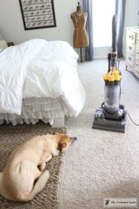 8 Tidy Home Tips for Dog Owners-8