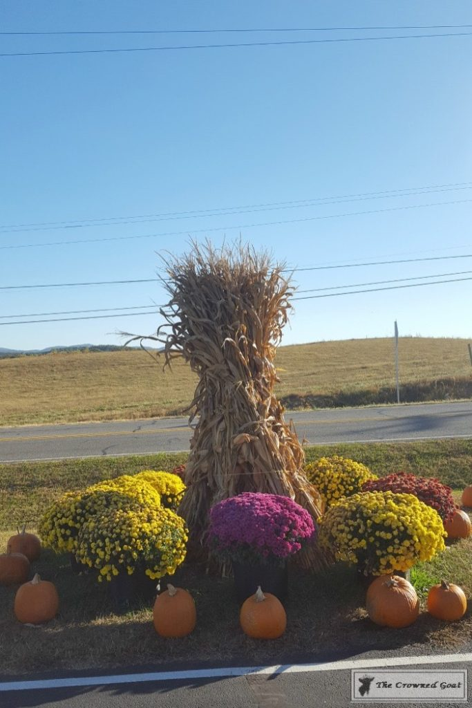 Fall-in-Blue-Ridge-12-683x1024 Fall in Blue Ridge Fall