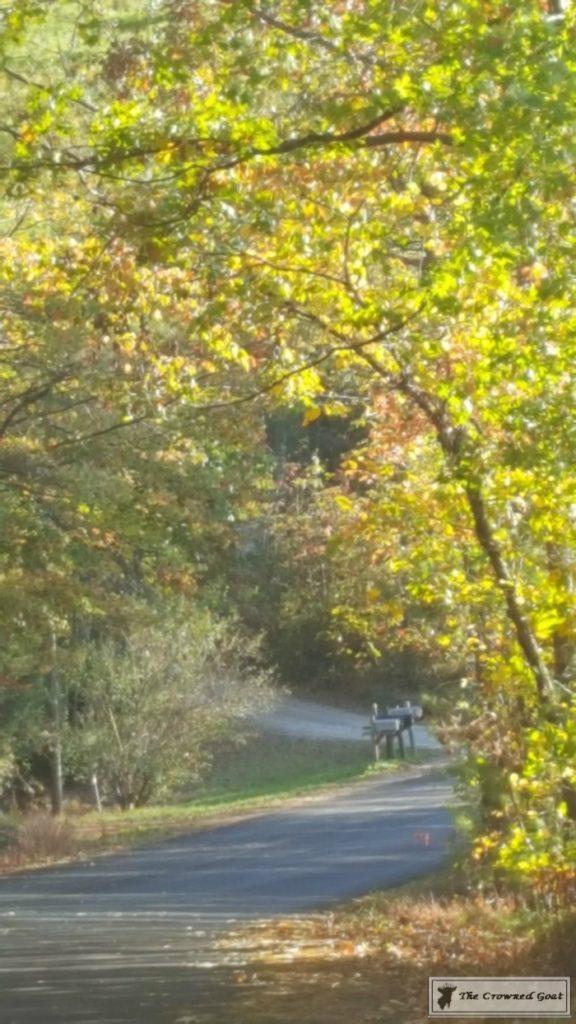 Fall-in-Blue-Ridge-14-576x1024 Fall in Blue Ridge Fall