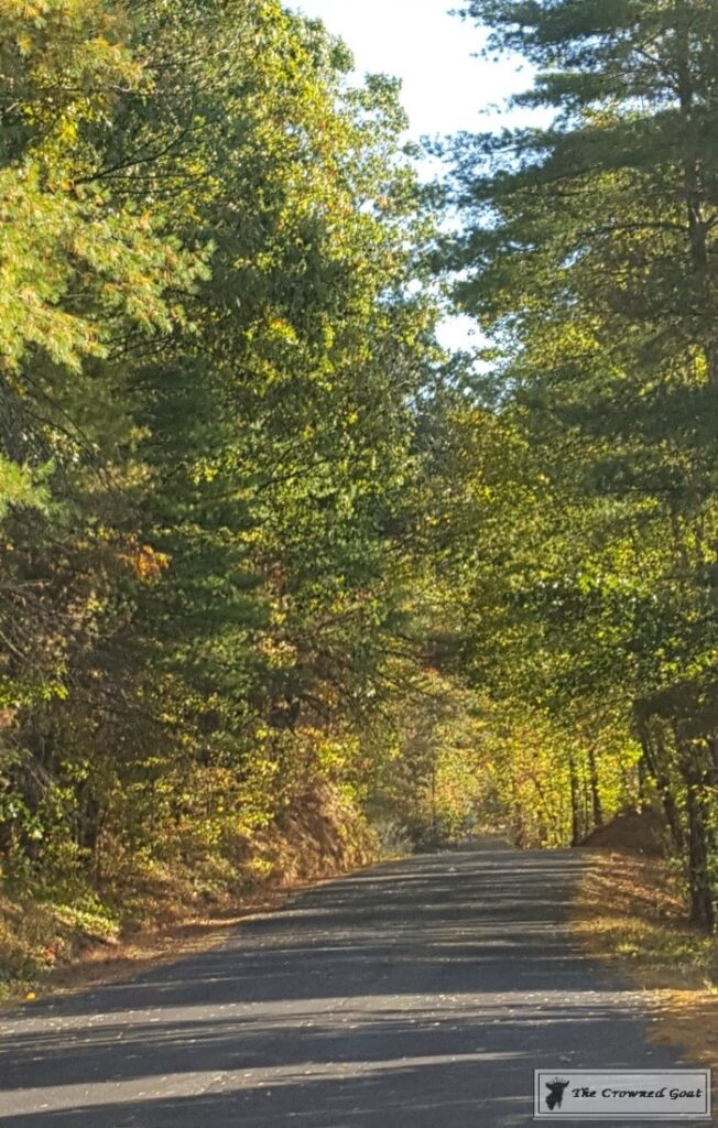 Fall-in-Blue-Ridge-2-652x1024 Fall in Blue Ridge Fall
