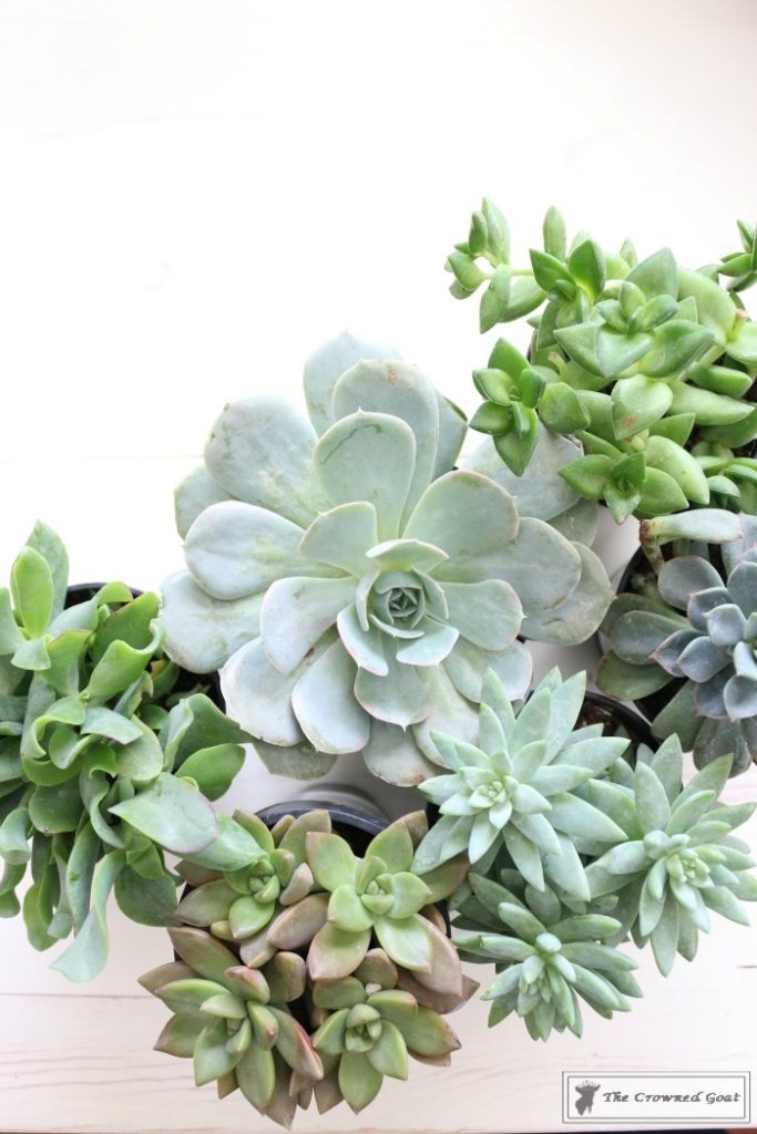 Spring-Succulent-Centerpiece-4-683x1024 Simple Succulent Centerpiece for Spring Spring