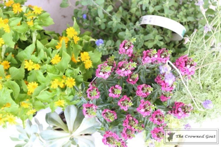 Lavender-Gardeners-Scrub-2 Make at Home Lavender Gardener's Hand Scrub DIY Summer