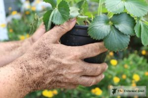 Lavender Gardener's Scrub-3