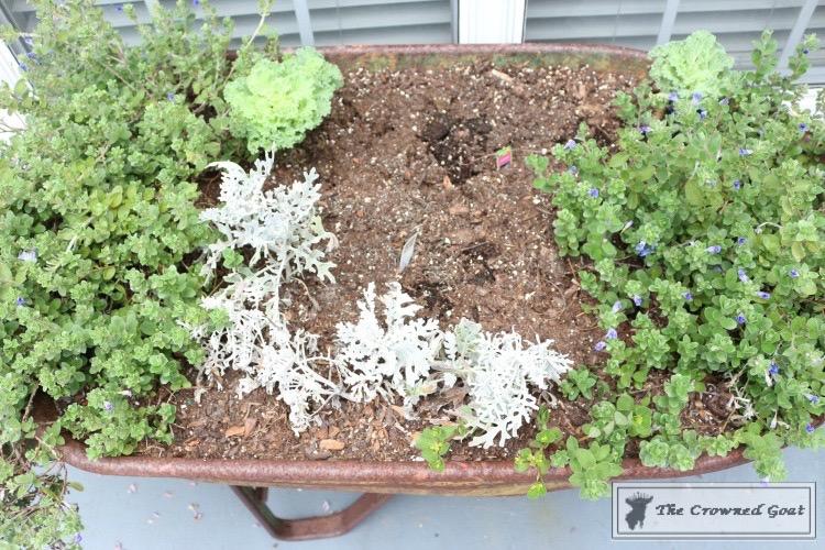 Lavender-Gardeners-Scrub-4 Make at Home Lavender Gardener's Hand Scrub DIY Summer