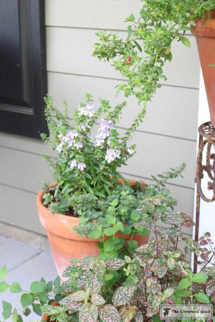 Lavender-Gardeners-Scrub-6-683x1024 Make at Home Lavender Gardener's Hand Scrub DIY Summer